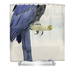 Hyacinth Macaw Shower Curtain by Henry Stacey Marks