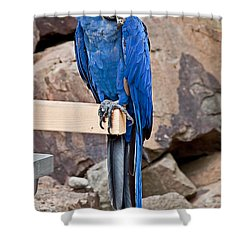 Hyacinth Macaw Parrot Bird Art Prints Shower Curtain