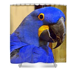 Hyacinth Macaw Portrait Shower Curtain