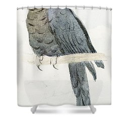 Hyancinth Macaw Shower Curtain by Henry Stacey Marks