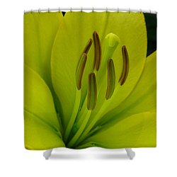Shower Curtain featuring the photograph Hybrid Lily Named Trebbiano by J McCombie
