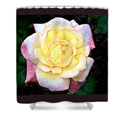 Shower Curtain featuring the photograph Hybrid Tea Rose Cultivator by William Tanneberger
