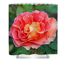 Hybrid Tea Rose  Shower Curtain by Lisa Phillips