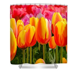 Shower Curtain featuring the painting Hybrid Tulips by Tim Gilliland