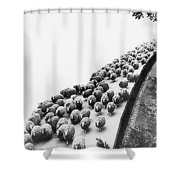 Hyde Park Sheep Flock Shower Curtain by Underwood Archives