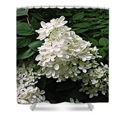 Shower Curtain featuring the photograph Hydrangea Arborescens ' Annabelle ' by William Tanneberger
