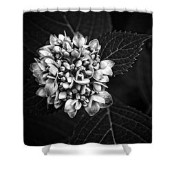 Hydrangea In Monochrome #5 Shower Curtain