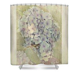 Hydrangea Macrophylla Blue Bonnet Shower Curtain by John Edwards