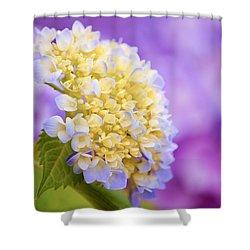 Hydrangea On Purple Shower Curtain