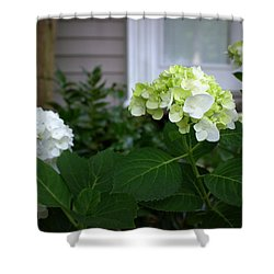 Hydrangeas IIi Shower Curtain