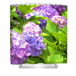 Shower Curtain featuring the photograph Hydrangeas In The Sun by Rachel Mirror