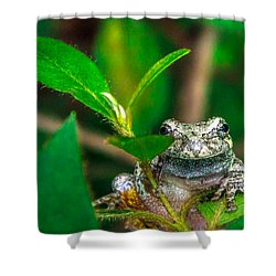 Shower Curtain featuring the photograph Hyla Versicolor by Rob Sellers