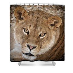 Hypnotic Gaze Shower Curtain by Lena  Owens OLena Art