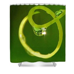 I Am Oz Shower Curtain by Charlotte Schafer