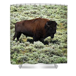 I Am The King Of This Meadow Shower Curtain by Ausra Huntington nee Paulauskaite