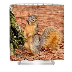 Shower Curtain featuring the photograph I Believe The Answer Is by Debby Pueschel
