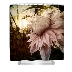 I Bloom Only For You She Whispered Shower Curtain by Susan Maxwell Schmidt