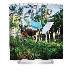 I Got A Fever And The Only Prescription Is More Cowbell Shower Curtain by A Rey