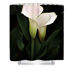 I Love You Shower Curtain by Penny Lisowski