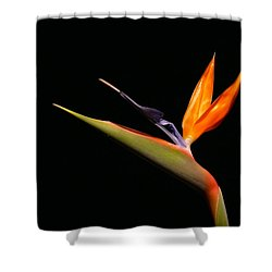 Shower Curtain featuring the photograph I Love You Too by Evelyn Tambour