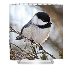 Shower Curtain featuring the photograph I May Be Tiny But You Should See Me Fly by Heather King