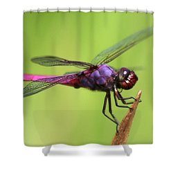 Dragonfly - I See You Shower Curtain