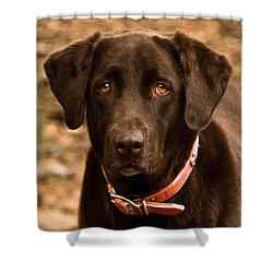Shower Curtain featuring the photograph I Swear I Didn't Do It by Robert L Jackson
