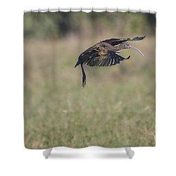 Ibis In Flight Shower Curtain