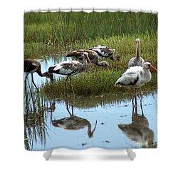 Ibis Shower Curtain by Kim Pate