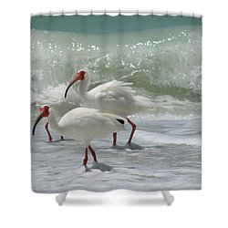 Ibis Pair Shower Curtain