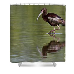 Ibis Reflection Shower Curtain