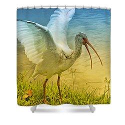 Ibis Talking Shower Curtain by Deborah Benoit