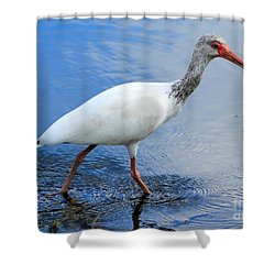 Ibis Visitor Shower Curtain by Carol Groenen