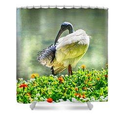 Ibis  Shower Curtain