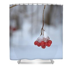 Ice Berries Shower Curtain by Sabine Edrissi