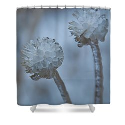 Shower Curtain featuring the photograph Ice-covered Winter Flowers With Blue Background by Cascade Colors