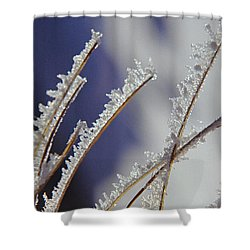 Shower Curtain featuring the photograph Ice Crystals On Fireweed Fairbanks  Alaska By Pat Hathaway 1969 by California Views Mr Pat Hathaway Archives