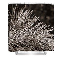 Ice On Pine Shower Curtain