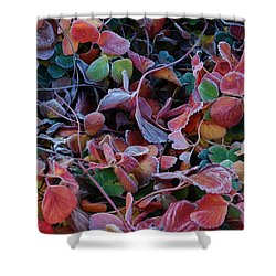 Iced Berries Shower Curtain