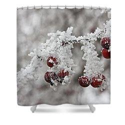 Iced Hawthorn Shower Curtain