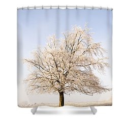 Iced Tree Shower Curtain by Anne Gilbert