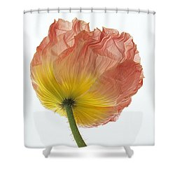 Iceland Poppy 1 Shower Curtain by Susan Rovira