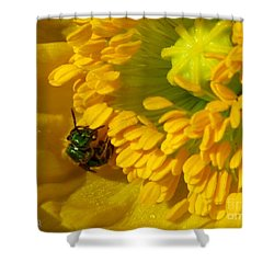 Shower Curtain featuring the photograph Iceland Poppy Pollination by J McCombie