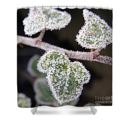 Icy Ivy Shower Curtain by Terri Waters