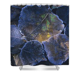 Icy Leaves Shower Curtain by Susan Rovira