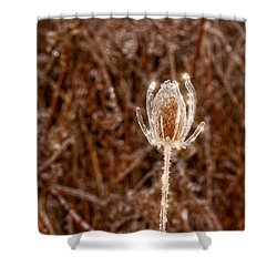 Icy Thistle Shower Curtain by Les Palenik
