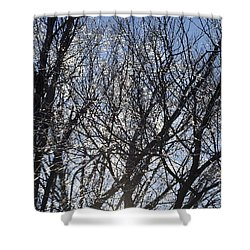 Icy Trees  Shower Curtain by Luther   Fine Art