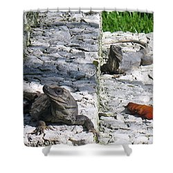 Shower Curtain featuring the photograph Iguana Bask In The Sun With You by Patti Whitten