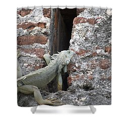 Shower Curtain featuring the photograph Iguana by David S Reynolds