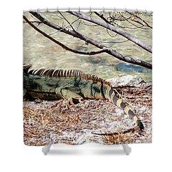 Shower Curtain featuring the photograph Iguana Iguana by Amar Sheow